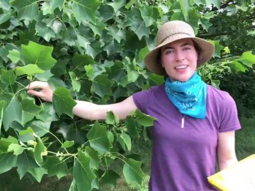 Kristen Haynes presents online Exploring Nature program