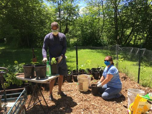 Kamal Mohamed, Rice Creek Field Station director, and Laurel Artz, Rice Creek Association president, transplant tree seedlings as part of the Canal Forest Restoration Project
